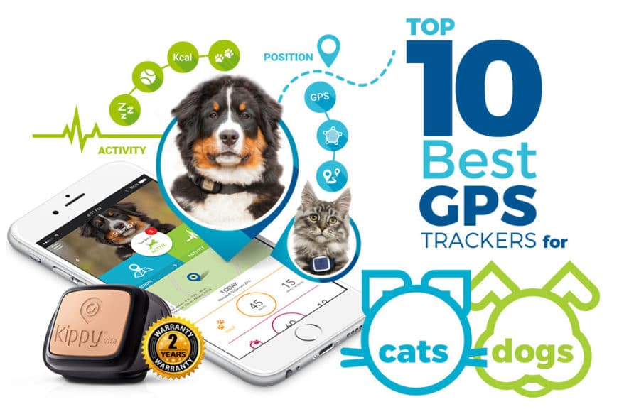 Top Ten Intuitive Best GPS Trackers for Cats and Dogs