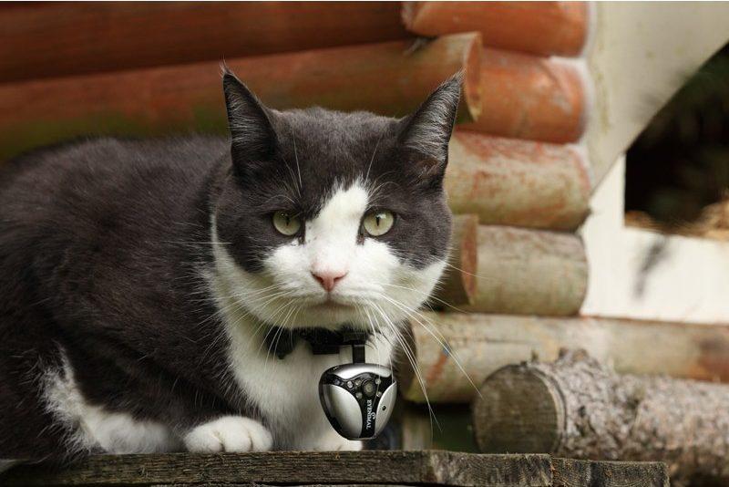 eyeanimal cat videocam